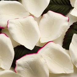 Picture of Paper Rose Petals in Ivory with Cerise edge