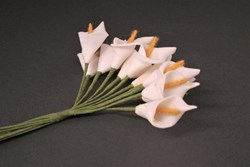 Picture of Arum Lily