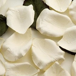 Picture of Paper Rose Petals in Ivory